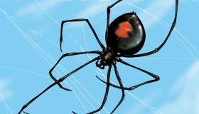 Close up of Black Widow spider in web