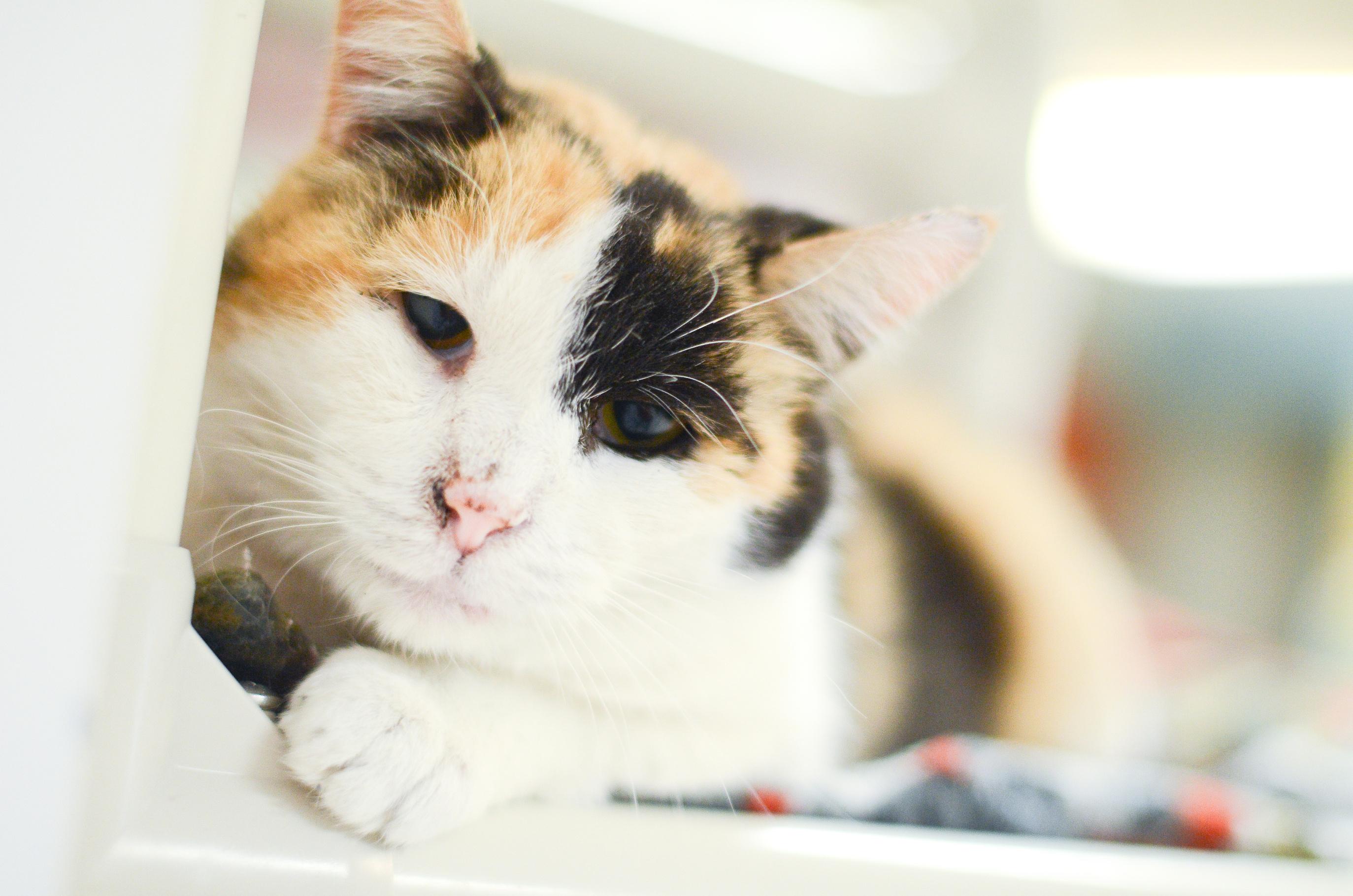 Animal House Kittens 7/9/15